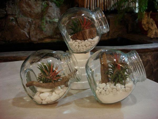 Perierga.gr - Terrarium, ένας κήπος μέσα σε γυαλί!
