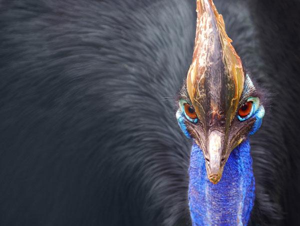 perierga.gr - Το πιο επικίνδυνο πτηνό στον πλανήτη!