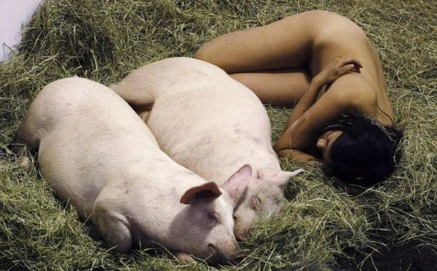 Perierga.gr - Αγκαλιά με τα γουρούνια για 104 ώρες