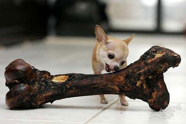 perierga.gr - Ένα μικρό σκυλί... τσέπης!