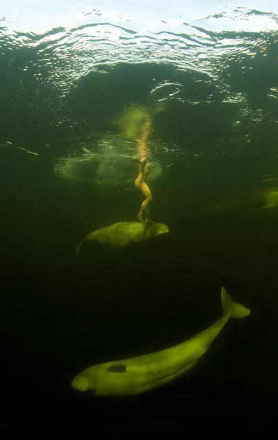 perierga.gr - Κολυμπώντας μαζί με τις... φάλαινες!