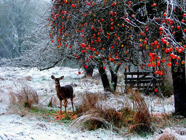 perierga.gr - Ένας χειμώνας... σε καρτποστάλ!