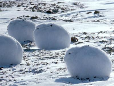 perierga.gr - Βλέπεις πολλές χιονομπάλες; Δες καλύτερα!