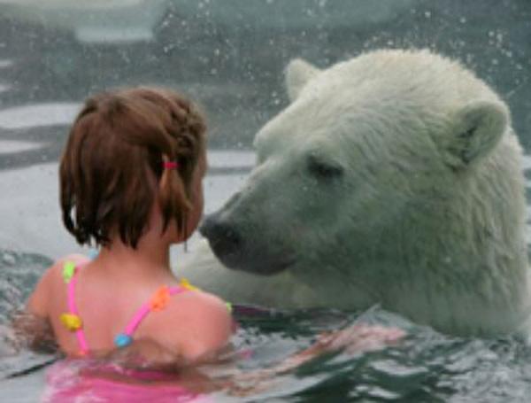 perierga.gr - Εσείς θα κολυμπούσατε με τις πολικές αρκούδες;