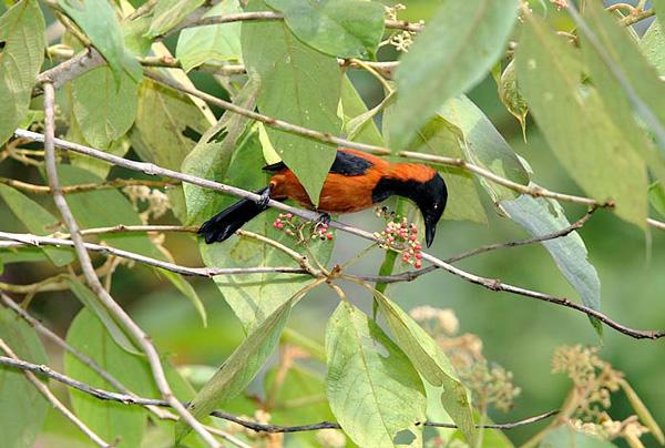 perierga.gr - Δηλητηριώδη δεν είναι μόνο τα φίδια! Είναι και τα πτηνά!