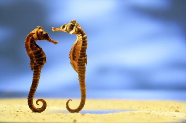Θέλω μια φωτογραφία... - Σελίδα 20 Seahorse1