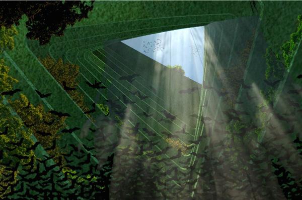 "perierga.gr - Χιλιάδες δέντρα ""φυτρώνουν""... στη θάλασσα!"