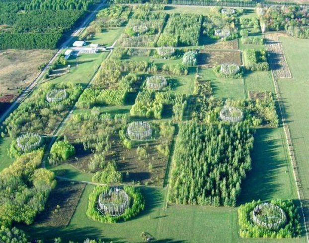 Perierga.gr - Τεχνητά δέντρα θα «καθαρίζουν» την ατμόσφαιρα