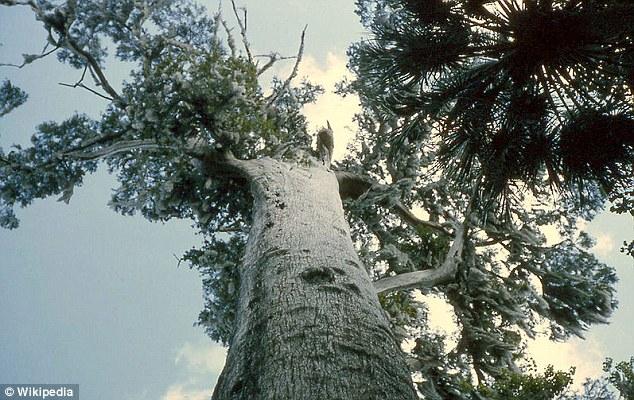 Perierga.gr - Κάηκε δένδρο 3.500 ετών!