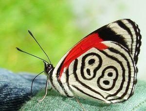 """Η """"τυχερή"""" πεταλούδα με το Νο 88..."""