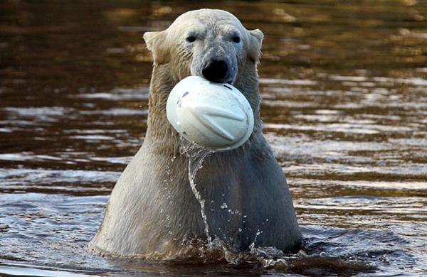perierga.gr - Τα παιχνίδια μιας πολικής αρκούδας!