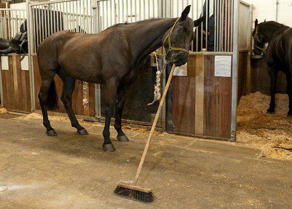 perierga.gr - Ένα άλογο καθαρίζει το στάβλο με μια σκούπα!