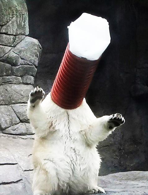 "perierga.gr - Το σόου μιας αρκούδας ""τρελαίνει"" το Διαδίκτυο!"