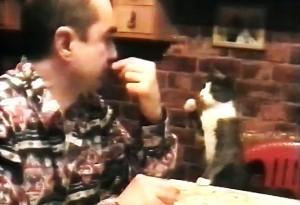 perierga.gr - Γάτα ζητάει το φαγητό της στη... νοηματική!