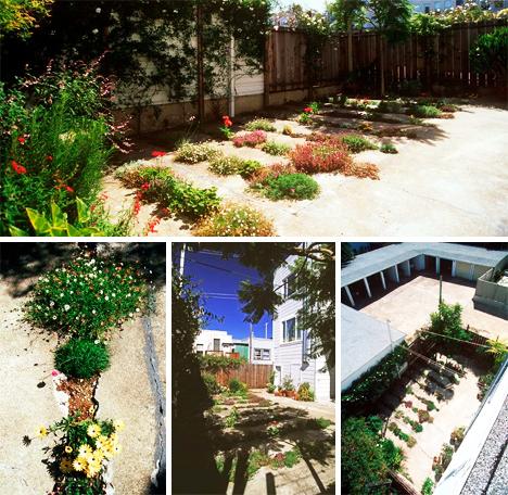 perierga.gr - Ουπς! Ένας... ραγισμένος κήπος στο τσιμέντο!