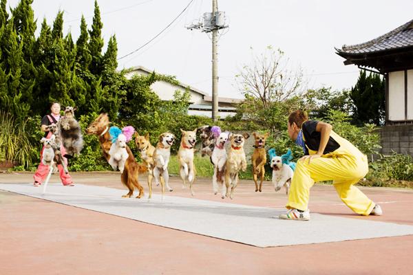 perierga.gr - Απίστευτο! 13 σκυλιά κάνουν μαζί... σχοινάκι!