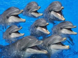 perierga.gr - Λουόμενοι έσωσαν 20 παγιδευμένα δελφίνια!