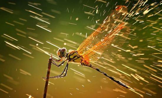 Perierga.gr - Μπορούν τα έντομα να πετούν στη βροχή;