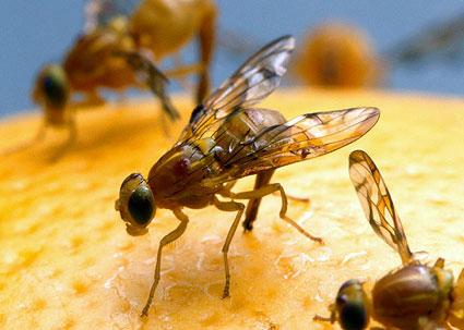 Perierga.gr - Μετά τη χυλόπιτα οι μύγες το ρίχνουν στο ποτό!