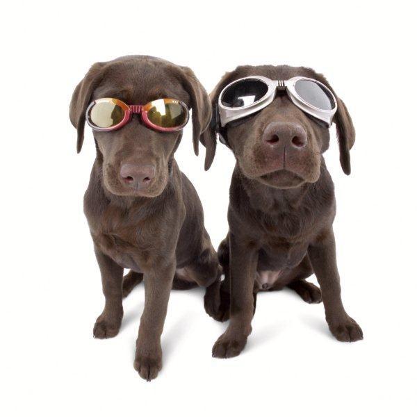 perierga.gr - Εκκεντρικά γυαλιά για... σκύλους!