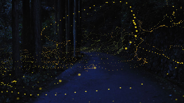 perierga.gr - Η φωτεινή διαδρομή των... πυγολαμπίδων!