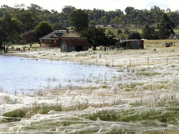 Perierga.gr - Αυστραλία: Τεράστιες εκτάσεις καλύφθηκαν με ιστούς αράχνης
