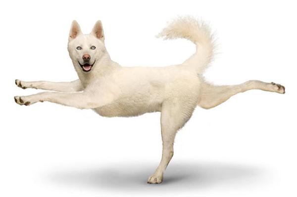 perierga.gr - Κάνουν και τα σκυλιά... γιόγκα;
