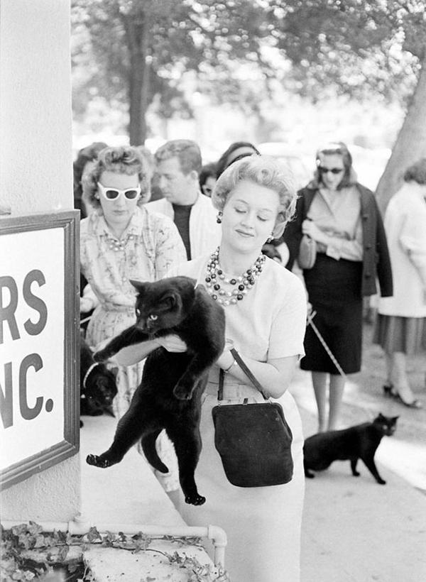 perierga.gr -Μια πρωτότυπη οντισιόν για... μαύρες γάτες!
