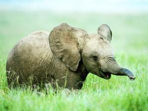 perierga.gr - Ένας ελέφαντας... φαν της τεχνολογίας!