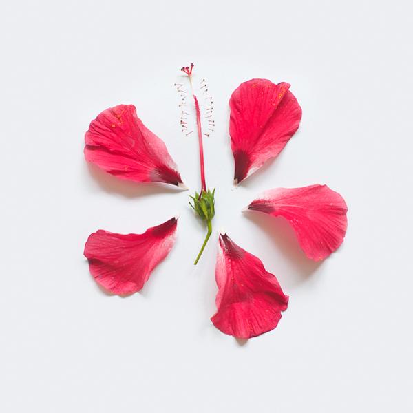 perierga.gr - Έκρηξη... λουλουδιών μπροστά στο φακό!