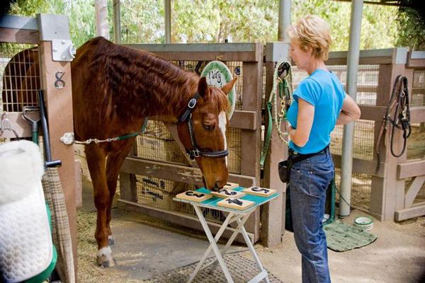 perierga.gr - Το εξυπνότερο άλογο στον κόσμο!