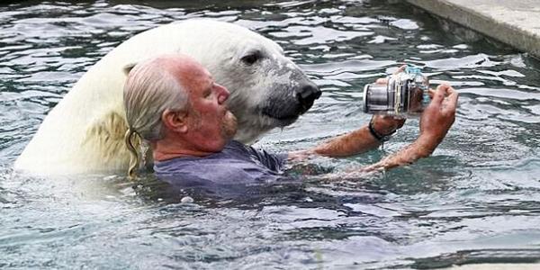 "perierga.gr - Κολυμπώντας ""αγκαλιά"" με μια πολική αρκούδα!"