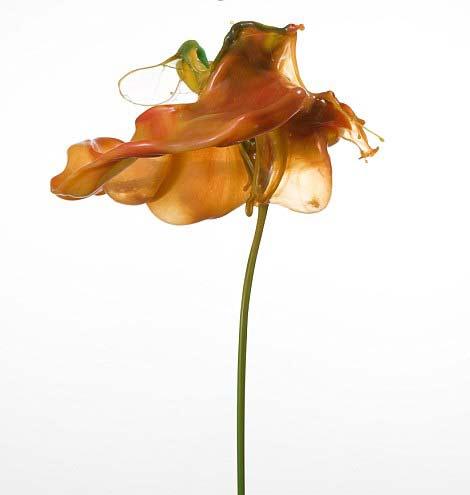"""perierga.gr - Πολύχρωμα """"υγρά"""" λουλούδια στον αέρα!"""