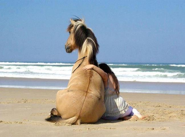 Perierga.gr - Τα άλογα «φωτογραφίζουν» τον ιδιοκτήτη τους