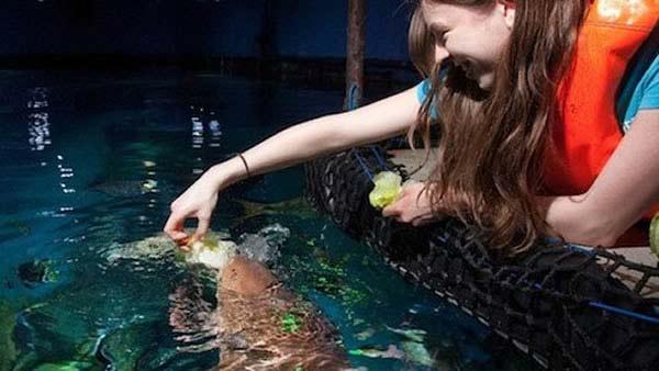 perierga.gr - Ο πρώτος χορτοφάγος... καρχαρίας στον κόσμο!