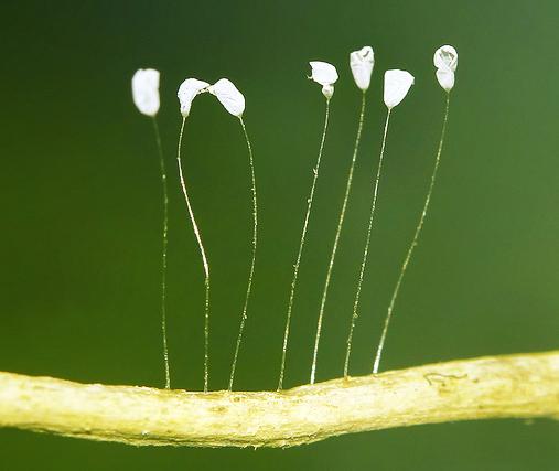 perierga.gr - Ένα σπάνιο λουλούδι ανθίζει κάθε 3.000 χρόνια!