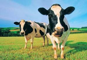 """perierga.gr - Τι σημαίνει για κάθε πολιτικό σύστημα """"έχω 2 αγελάδες"""";"""