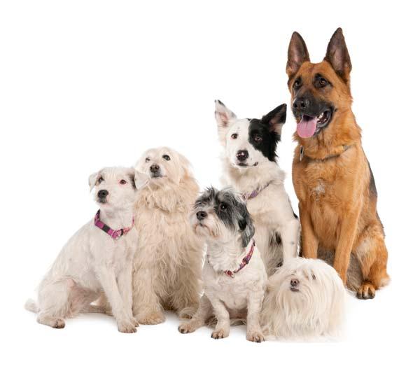 perierga.gr - Τα σκυλιά είναι καλύτερα από τους ανθρώπους!
