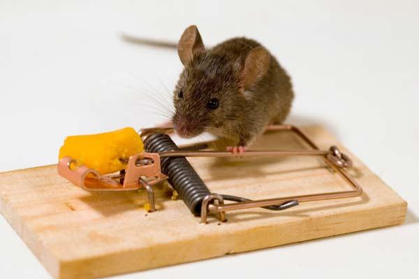 Μια επίκαιρη ιστορία: Το ποντίκι και η ποντικοπαγίδα! | Perierga.gr