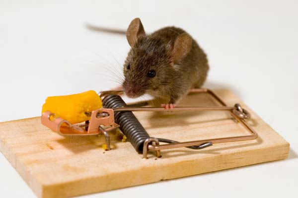 perierga.gr - Μια επίκαιρη ιστορία: Το ποντίκι και η ποντικοπαγίδα!
