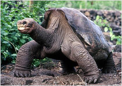 Perierga.gr - Πέθανε η τελευταία χελώνα Πίντα των Γκαλαπάγκος