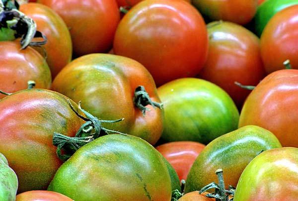 perierga.gr - Γιατί οι ντομάτες του σουπερμάρκετ είναι άνοστες;