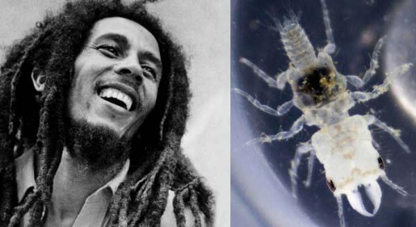 perierga.gr - Ζώα & έντομα με ονόματα διασήμων!