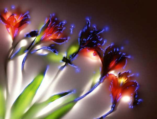 perierga.gr - Λουλούδια... υψηλής τάσης!