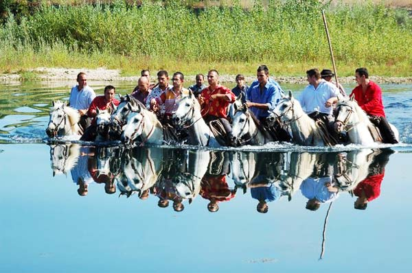 perierga.gr - Camargue: Η Άγρια Δύση της Ευρώπης!