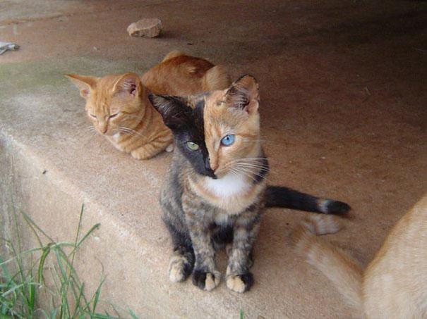 perierga.gr - Η πιο... cool γάτα που έγινε ποτέ!