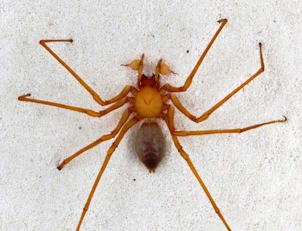 perierga.gr - 5 έντομα που θα... στοιχειώσουν τους εφιάλτες σας!