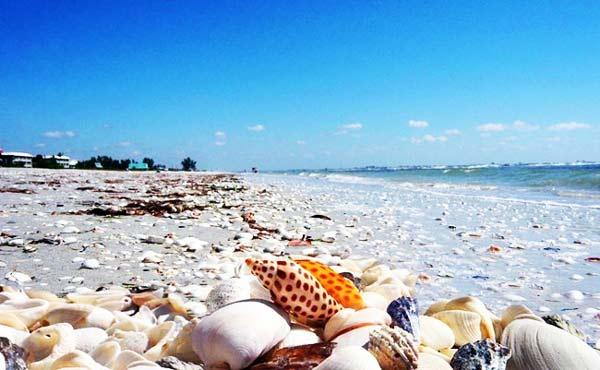 Σπάνιες παραλίες… κοχυλιών!