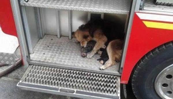 perierga.gr - Μια θαρραλέα σκυλίτσα, μια ηρωική μάνα!
