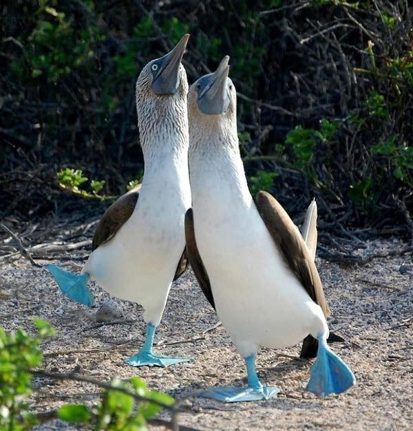 "perierga.gr - 8 απίθανοι τρόποι για να πουν τα πουλιά ""σ' αγαπώ""!"